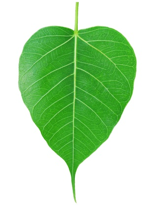 whote: leaf on whote background Stock Photo