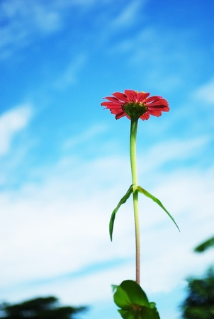 Red flower on blue sky