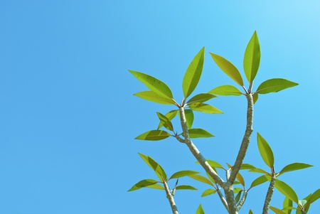 Green leaf on blue sky  background Stock Photo