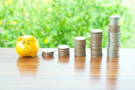 gold pig saving money photo