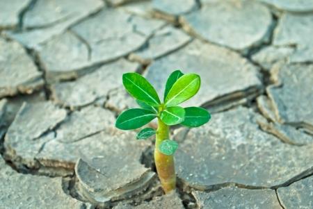 sequias: �rbol joven que crece en suelo agrietado