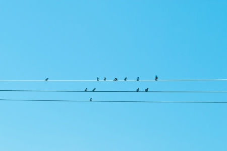 bird on main wire under blue sky Stock Photo