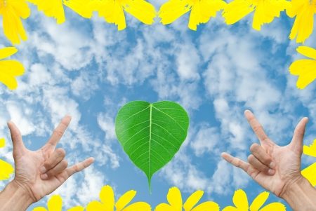 a hand , leaf and yellow flower on beautiful blue sky background Stock Photo - 13923505