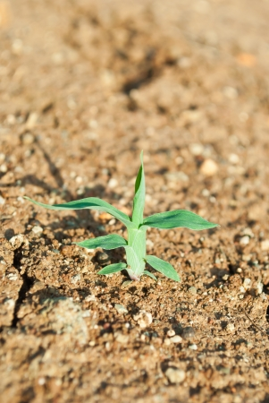 young tree growing around cracked soil photo