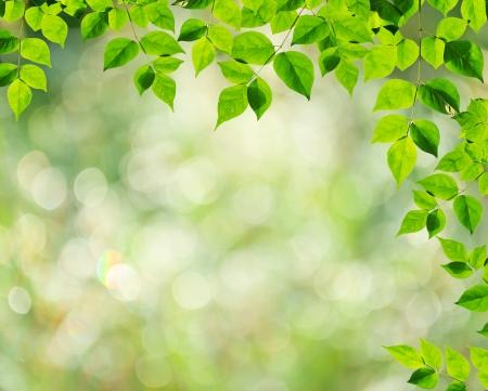 tree branch green leaf Stock Photo