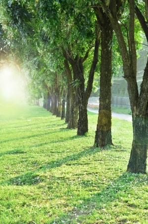trees with sun light photo