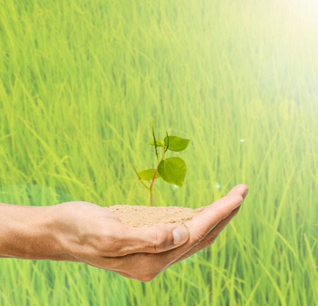 young tree in hand holding ,green blur background Stock Photo