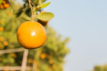 sulight: One orange ball in the fram