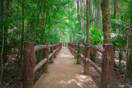 pathway in green forest Vignette. Stock Photo