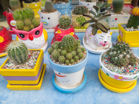 Many cactus species in colorful pots.