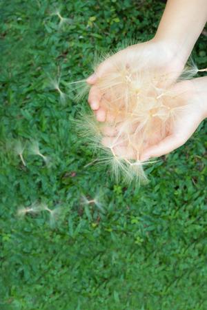 Flying seeds of horseradish in the hands of girls. Lizenzfreie Bilder