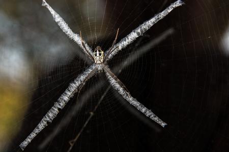 Spider webs on the x-shaped weird. Lizenzfreie Bilder