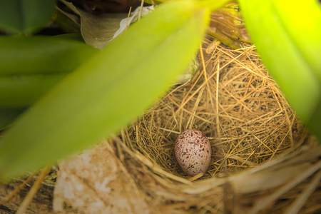 Birds nest and eggs in the forest