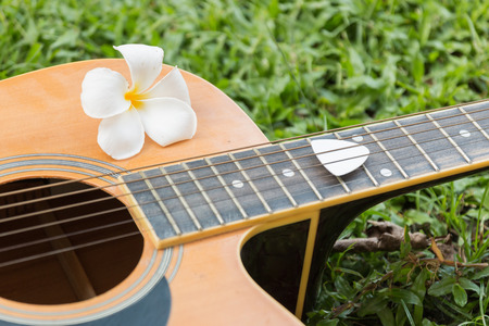 close-up Plumeria and guitar on grass .