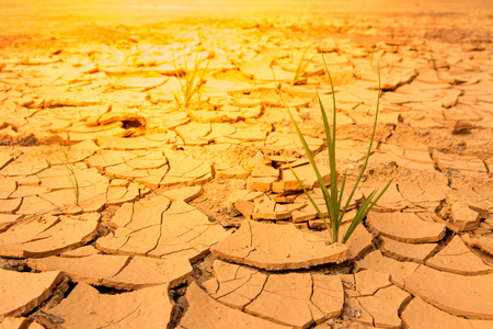 Dry soil With grass.