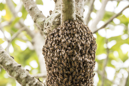 Bees nest in the trees.