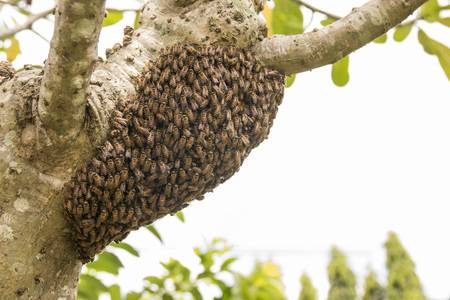 Background bees were nesting in the trees.