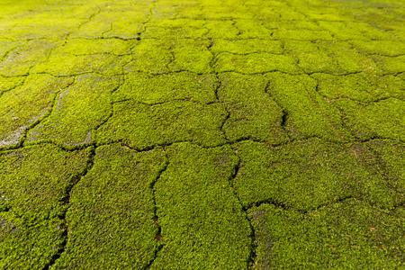 closeup Moss on a wall Lizenzfreie Bilder