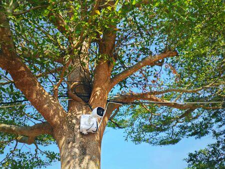 cctv camera installed on an outdoor tree Zdjęcie Seryjne