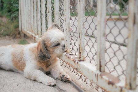 Shih Tzu dog sleeping in front of the gate.