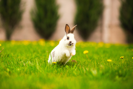 Easter rabbit jumping on the green grass