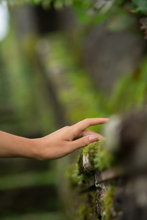close-up shoot of a female hand is touches into a moss grown on a rock Stock Photo