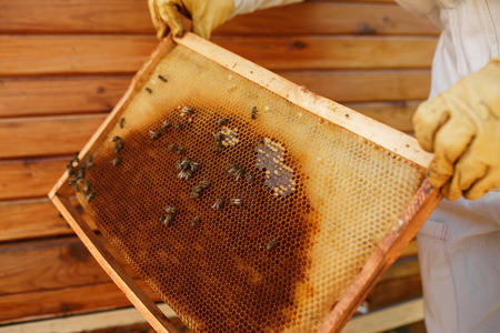 hands of beekeeper pulls out from the hive a wooden frame with honeycomb. Collect honey. Beekeeping concept. Stockfoto