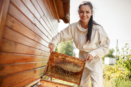 Young female beekeeper pulls out from the hive a wooden frame with honeycomb. Collect honey. Beekeeping concept.