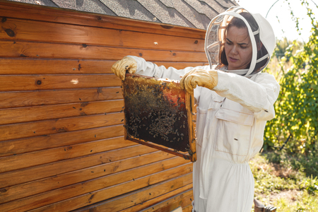 Young female beekeeper hold wooden frame with honeycomb. Collect honey. Beekeeping concept. Stockfoto