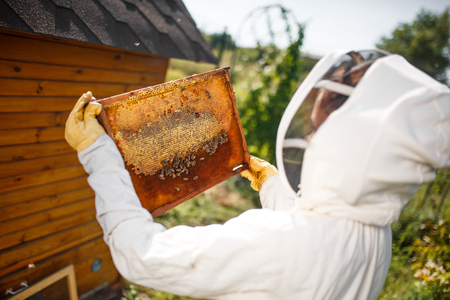 A young female beekeeper in a professional beekeeper costume, inspects a wooden frame with honeycombs holding it in her hands. Collect honey. Beekeeping concept. Stock Photo