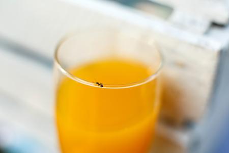 Little ant crawling on glass of orange juice.
