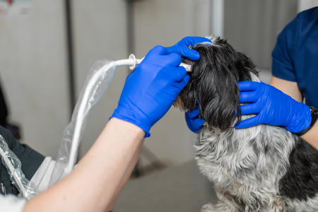 vets do an ultrasound scan of the dogs injured eye in a veterinary. Animal health care concept