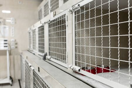 veterinary hospital cells for patients. Pets healthcare concept.