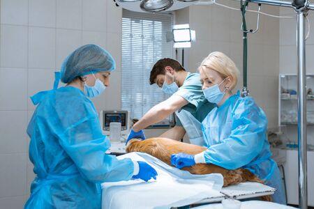 Dierenartsen bereiden de hond voor op een operatie om de tanden schoon te maken. De hond wordt op de operatietafel verdoofd. Huisdier tandheelkunde concept.