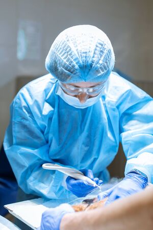 A vet surgeon brushes his dog's teeth under anesthesia on the operating table. Sanitation of the oral cavity in dogs. Dentist veterinarian treats teeth in a veterinary clinic. Veterinary Dentistry.