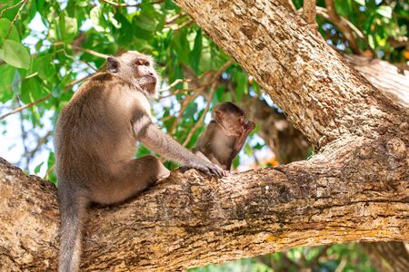 Little monkey portrait. Sits on a tree with his mom. Stock fotó