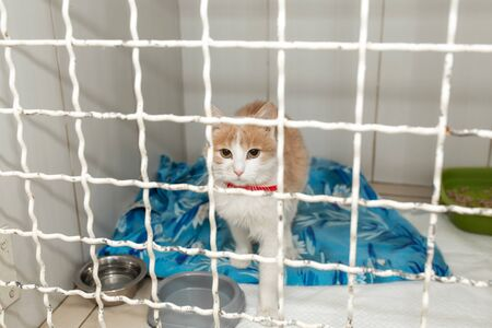 alone cat in shelter cage in clinic.