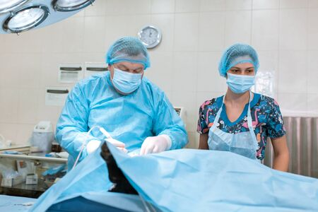 Medical team performing operation. Group of surgeon at work. Pet surgery