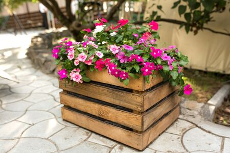 A flower bed with a beautiful pink and red flowers wooden box stands outdoors against the background of a tree and green lawn. 写真素材