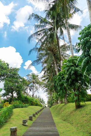 footpath in a tropical park. Tall palm trees and green lawn. Archivio Fotografico - 131320891
