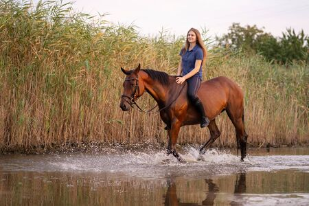A young girl riding a horse on a shallow lake. A horse runs on water at sunset. Care and walk with the horse. Strength and Beauty. Banco de Imagens