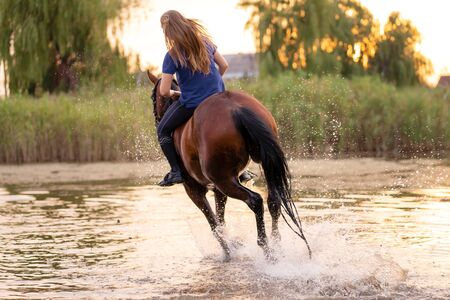 A young girl riding a horse on a shallow lake. A horse runs on water at sunset. Care and walk with the horse. Strength and Beauty. Reklamní fotografie