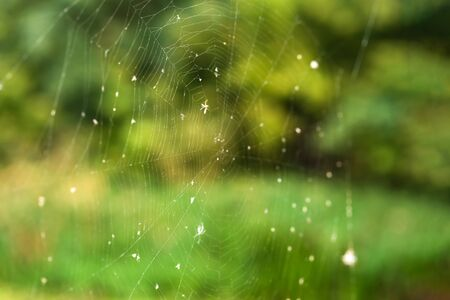 Spider web trap close-up on a background of green forest. Stockfoto