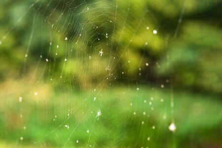 Spinnenweb val close-up op een achtergrond van groen bos. Stockfoto