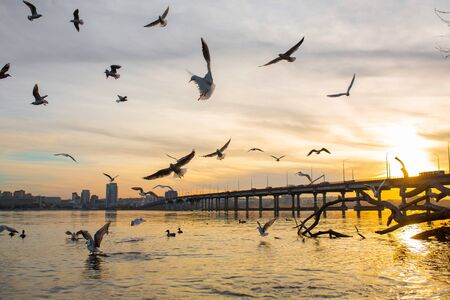 A flock of seagulls on the banks of the city river