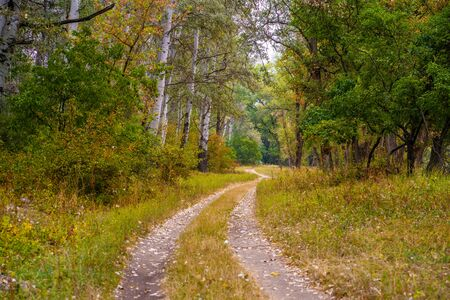 Autumn wild forest. Well-trodden path, fallen yellow leaves and yellowed grass.