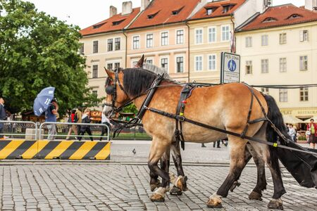 Carts with horses in the square of the old town of Prague.