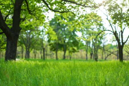 Fresh green grass among trees in spring forest.