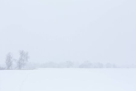 Winter landscape. Trees without foliage in a field covered with snow. Stock Photo