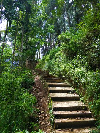 Stone stairs in the green jungle.
